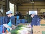 Nhật Bản tư vấn cho thực tập sinh nước ngoài qua ứng dụng trên điện thoại