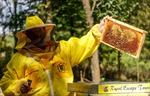 Độc đáo mô hình kinh doanh 'khách sạn ong' lấy mật