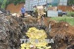 Yên Bái tiêu hủy trứng gà nhập lậu từ Trung Quốc