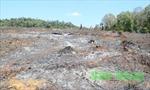Có dấu hiệu vi phạm pháp luật hình sự trong công tác quản lý bảo vệ rừng