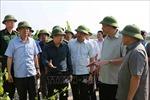 Quảng Ninh không được chủ quan trước diễn biến bão Mangkhut