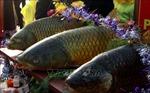 Hội thi cỗ cá không đâu có tại Lễ hội đền Trần - Thái Bình