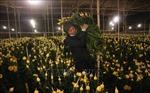 Dịp rằm tháng Giêng, giá hoa Đà Lạt tăng mạnh hơn cả Tết
