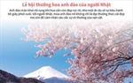 Lễ hội thưởng hoa anh đào của người Nhật