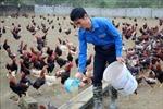 Nam thanh niên vùng cao làm giàu nhờ nuôi gà sạch theo tiêu chuẩn VietGAP