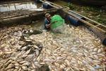 Di dời các hộ nuôi cá bè trên sông La Ngànhằm giải quyết ô nhiễm môi trường