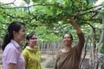 Chính sách của Đảng về nơi khô hạn - Bài 2: Để những vườn nho trĩu quả