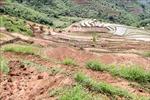 Mưa lũ làm sạt lở, cuốn trôi khoảng 8.500m2 lúa và hoa màu ở Lai Châu
