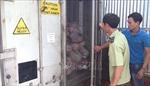 Hai container thịt lợn tại cơ sở làm giò chả bị nhiễm dịch tả châu Phi