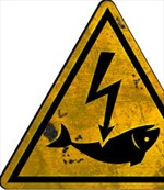 Hoạt động đánh bắt cá bằng xung điện bị cấm tại Bỉ