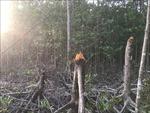 Kiểm tra toàn bộ tuyến rừng phòng hộ ven biển Cà Mau
