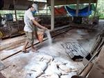 Gần 5,95 triệu con lợn phải tiêu hủy vì dịch tả lợn châu Phi