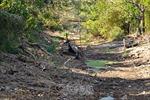 Hơn 20.800 hộ gia đình ở Cà Mau bị thiếu nước ngọt trong mùa khô hạn