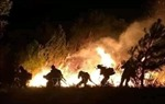 Thủ tướng chỉ đạo tăng cường phòng cháy, chữa cháy rừng