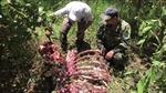 Đồng Nai: Truy bắt nhóm đối tượng sát hại bò tót trong Vườn quốc gia Cát Tiên