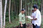 Hàng trăm hecta đất rừng ở Thừa Thiên – Huế bị xâm lấn trong thời gian dài
