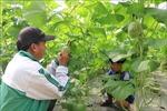 Thành lập, tổ chức và hoạt động của Quỹ hỗ trợ phát triển hợp tác xã