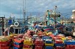 Ngư dân gặp khó khăn do giá hải sản xuống thấp
