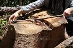 Phú Yên: Rừng thuộc Di tích lịch sử Hội trường Mùa Xuân bị xâm hại