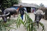 Giảm nghèo bền vững ở Phú Thọ - Bài 1: Khơi dậy khát vọng thoát nghèo