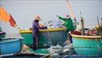 Triển khai cấp thẻ ngư dân 'vùng xanh'đánh bắt hải sản gần bờ