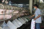 Giá lợn hơi giảm mạnh, người chăn nuôi thua lỗ nặng