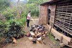 Hỗ trợ phụ nữ Sơn La phát triển kinh tế, giảm nghèo bền vững