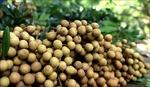 Việt Nam xúc tiến đưa trái nhãn vào thị trường Australia