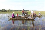 Đến Đồng Tháp trải nghiệm du lịch mùa nước nổi