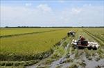 Để người dân sống chung với lũ - Bài 2: Thách thức của ngành nông nghiệp