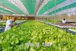 Hà Nội đẩy mạnh liên kết tiêu thụ nông sản an toàn