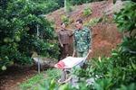 Ngày Phụ nữ Việt Nam 20/10: Người tiên phong đưa giống bưởi đỏ về vùng đất đồi