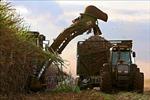 Brazil khởi kiện Trung Quốc về thuế nhập khẩu đường lên tới 95%