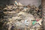Mua bán trái quy định 86 cá thể rùa, bị xử phạt gần 300 triệu đồng