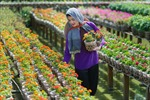 Đồng Tháp phát triển 15 nhãn hiệu ngành hàng nông sản chủ lực