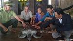 Thả rùa biển quý hiếm về môi trường tự nhiên
