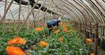 Nghề trồng hoa cho thu nhập đến cả tỷ đồng