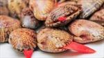 Thông tin người dân ăn sò lụa đỏ gây tử vong là sai sự thật