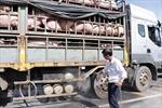 Kiểm soát chặt chẽ việc vận chuyển lợn, sản phẩm từ lợn qua biên giới