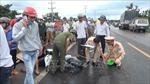 Bình Phước: Xe máy tông trực diện xe tải, 2 người chết, một người bị thương