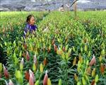 Phát triển hoa, cây cảnh là sản phẩm chủ lực trong xây dựng nông thôn mới