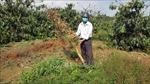 Cần ngăn chặn tình trạng phá hoại vườn cây của người dân ở Di Linh, Lâm Đồng