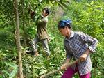 Xây dựng hệ thống đánh giá chi trả dịch vụ môi trường rừng thống nhất trên cả nước