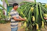 Vận chuyển nước ngọt 'giải khát' cho trên 15.000 ha vườn cây ăn quả đặc sản