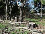 Xử lý nghiêm vụ sử dụng trên 1.000 ha đất rừng phòng hộ để trồng cây sai mục đích