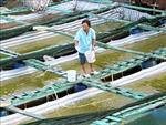 Ứng phó với biến đổi khí hậu toàn cầu: Bài cuối - Việt Nam huy động tối đa các nguồn tài chính