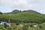 Trồng một tỷ cây xanh giai đoạn 2021 - 2025