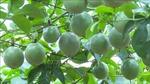 Phát triển các sản phẩm nông sản chủ lực theo chuỗi giá trị