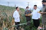 Triều Tiên kêu gọi nỗ lực sản xuất gạo