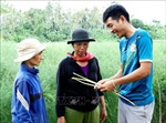 Khởi nghiệp thành công bằng mô hình trồng măng tây sạch